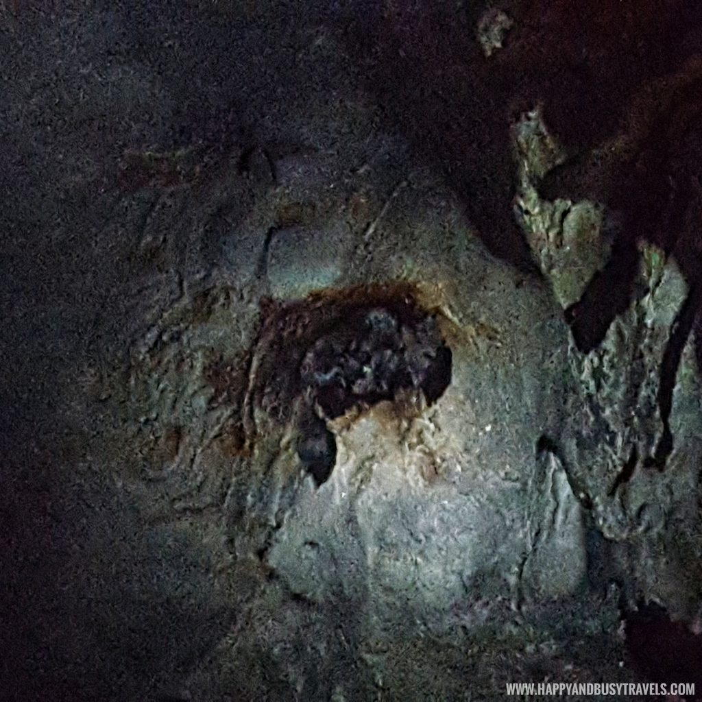 Calinawan Cave Tanay Rizal bats