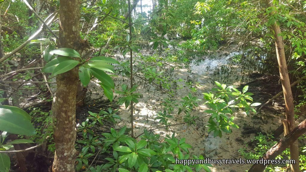 Mangrove - Guiwanon Spring Park
