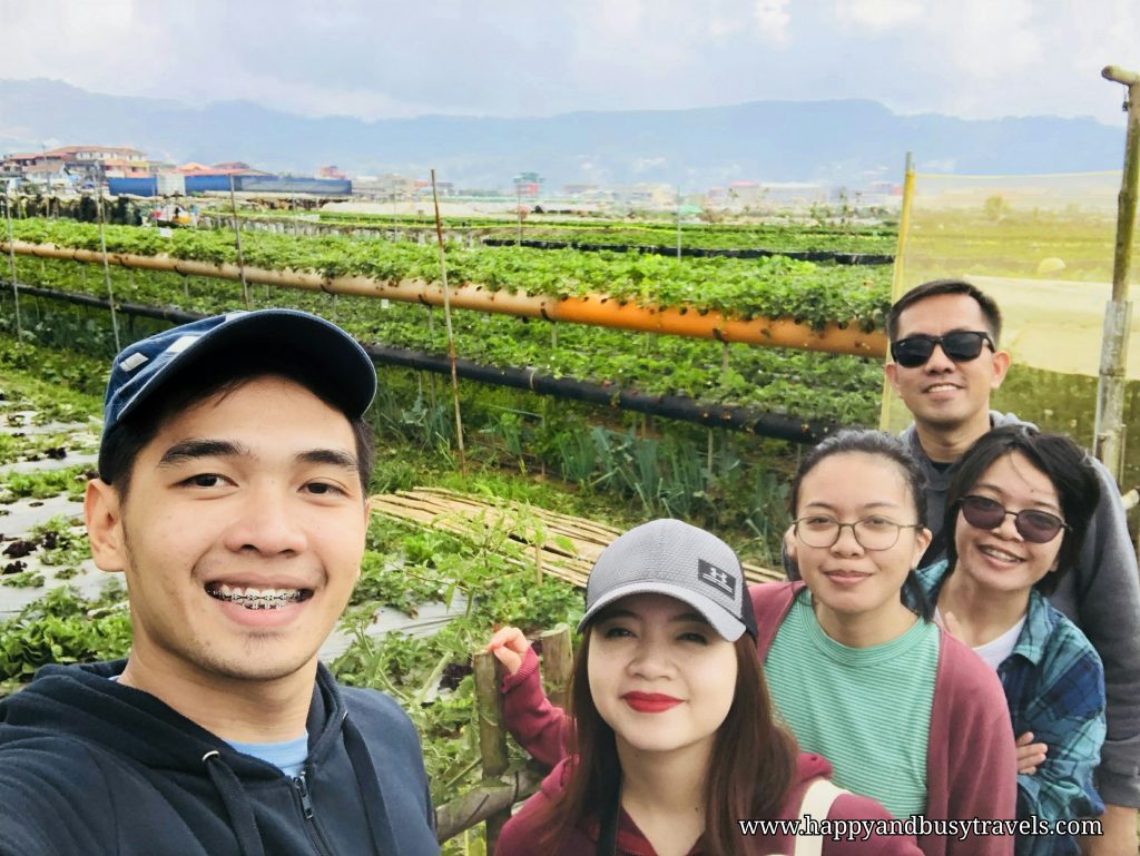 strawberry farm - Happy and Busy Travels to Sagada