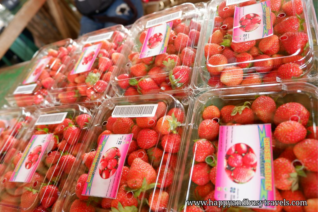 baguio and benguet strawberry - Happy and Busy Travels
