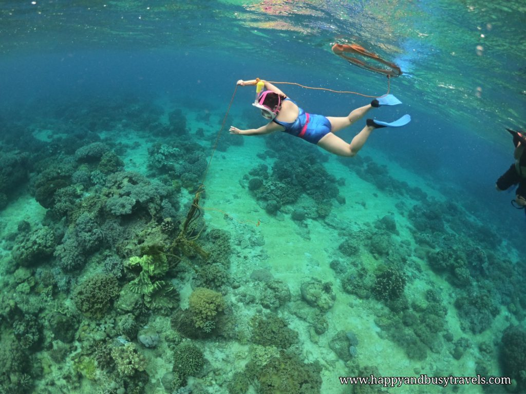 Snorkeling around Apo Island