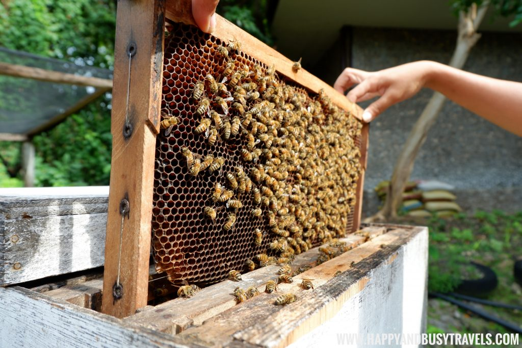 Bee Hive from Bohol Bee Farm Happy and Busy Travels