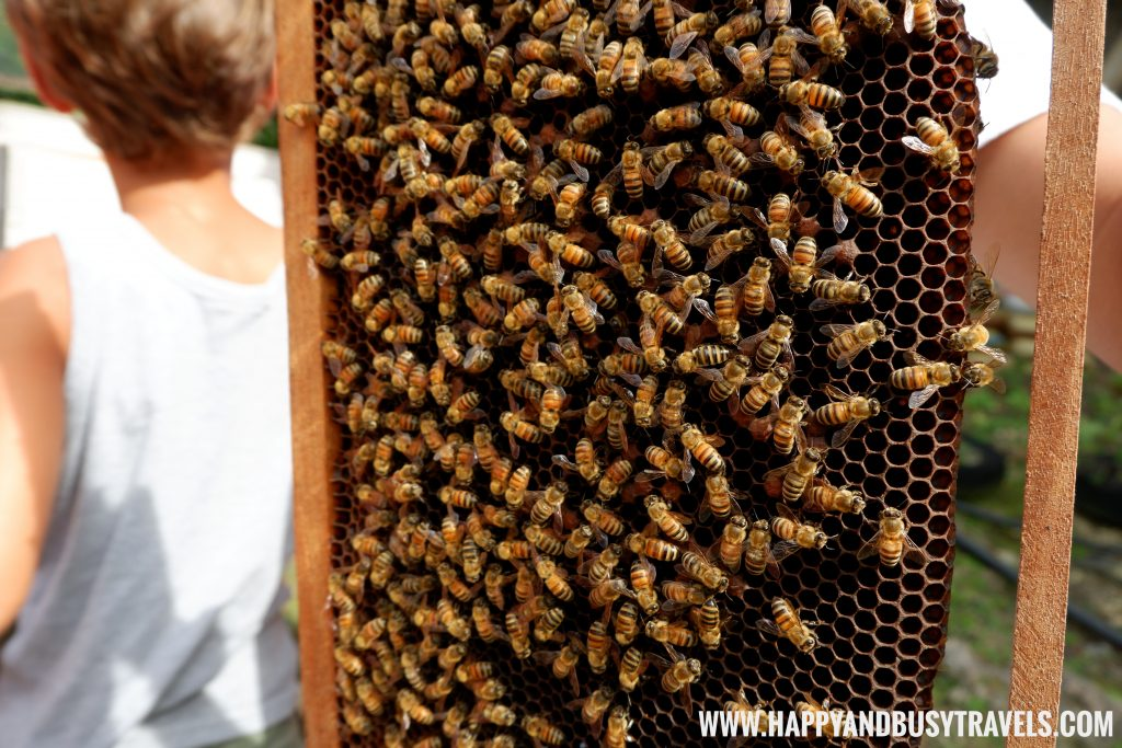 Bee Hive Bohol Bee Farm Happy and Busy Travels