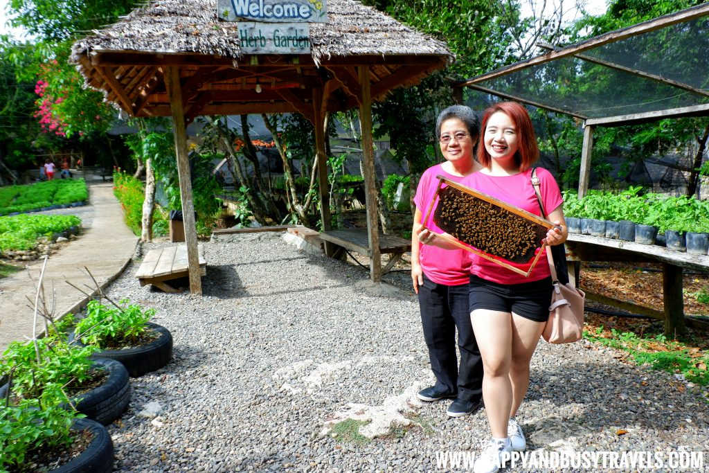 Selfie with the bees in Bohol Bee Farm