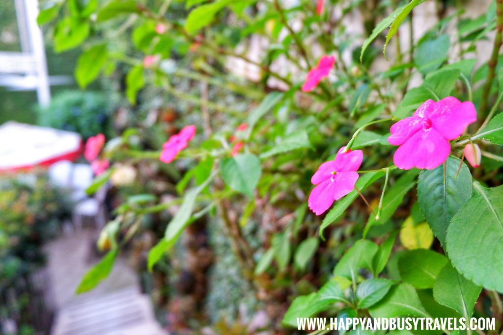 Flower ornamental plants of Deli de San Honore Happy and Busy Travels to Tagaytay
