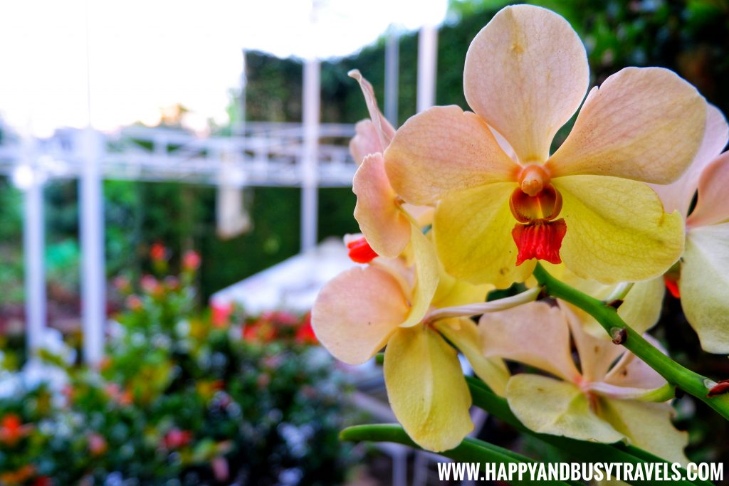Orchid ornamental plants of Deli de San Honore Happy and Busy Travels to Tagaytay