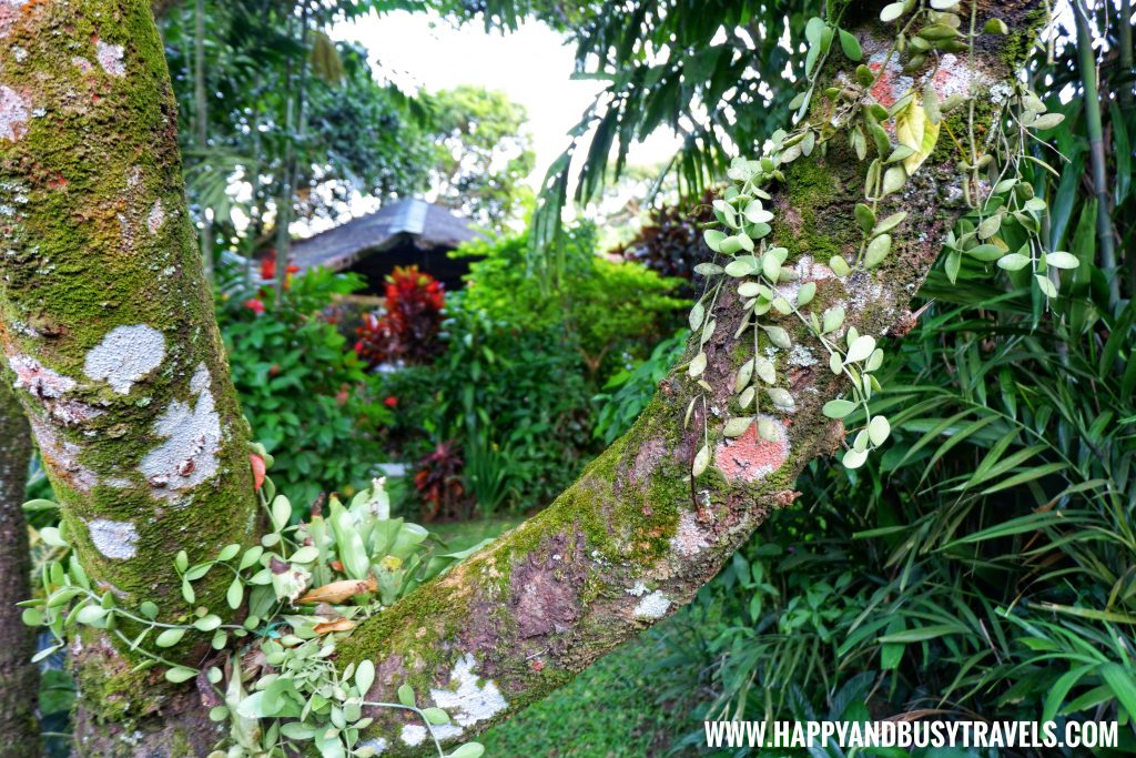 Wood Spring Tagaytay review, a house for rent in Tagaytay