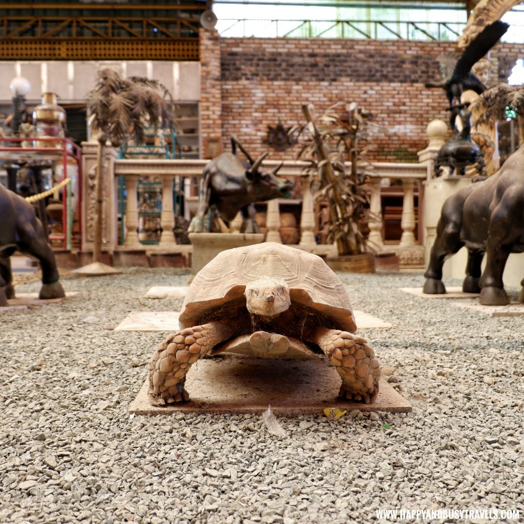 Tortoise taxidermy in Yoki's Farm Mendez Cavite Happy and Busy Travels Review