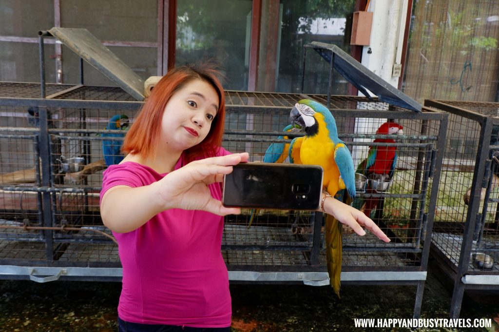 Selfie with Blue throated Macaw parrot Yoki's Farm Mendez Cavite Happy and Busy Travels Review