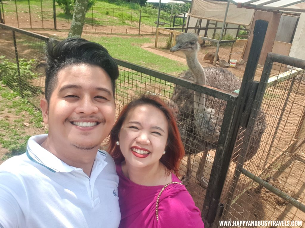 Ostrich in Yoki's Farm Mendez Cavite Happy and Busy Travels Review