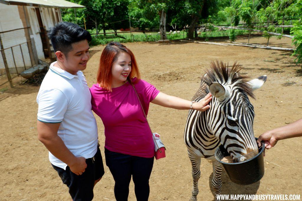 Zebra experience