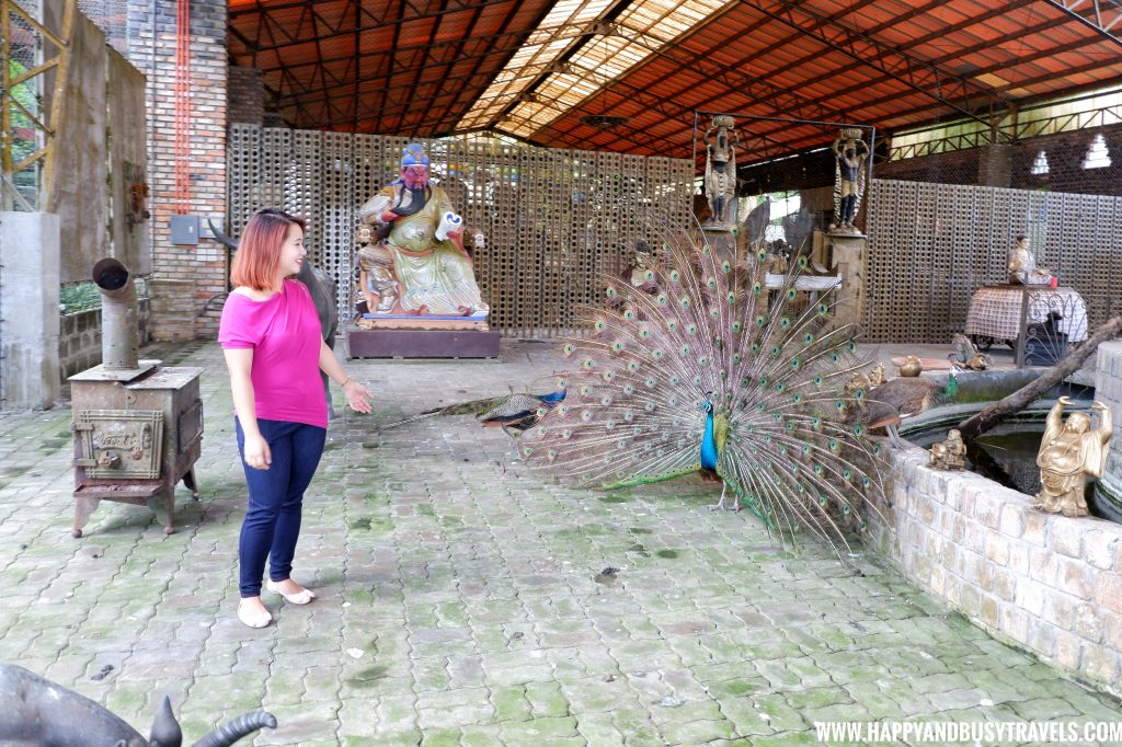 Peacock in Yoki's Farm Mendez Cavite Happy and Busy Travels Review
