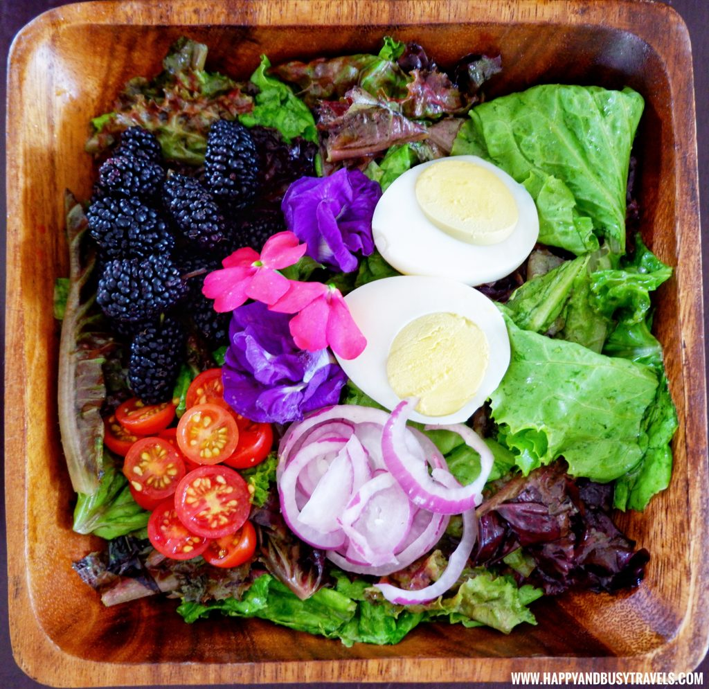 Yoki's Signature Salad The Farm Table Restaurant of Yoki's Farm Happy and Busy Travels Review