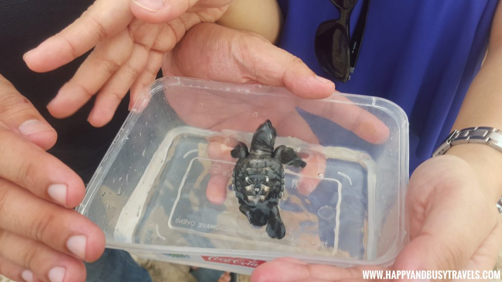 Baby Turtle Releasing by Kuta Beach Sea Turtle Conservation Center in Bali Indonesia