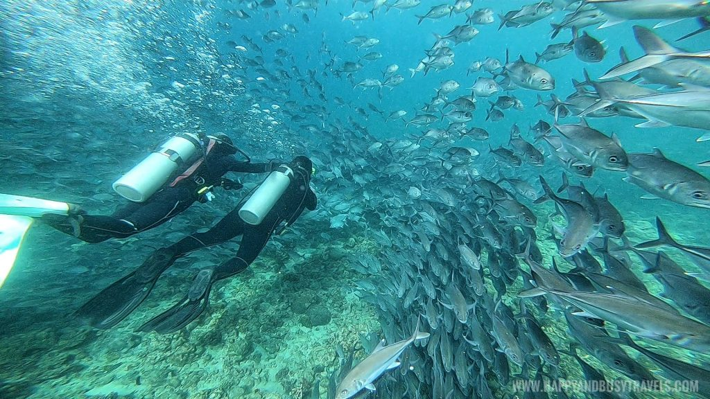 Going into the school of fish during our Introduction to Scuba Diving in Summer Cruise Dive Resort Batangas review of Happy and Busy Travels