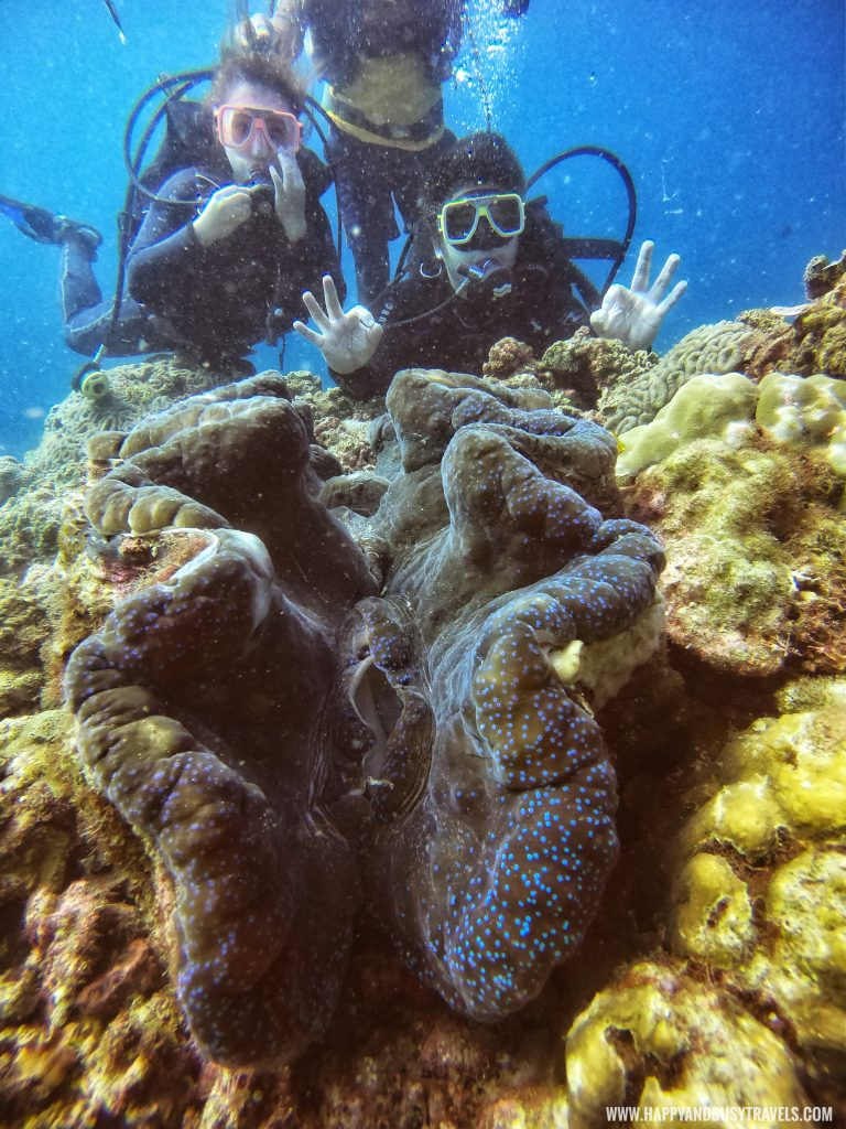 Giant Clam Introduction to Scuba Diving in Summer Cruise Dive Resort Batangas review of Happy and Busy Travels