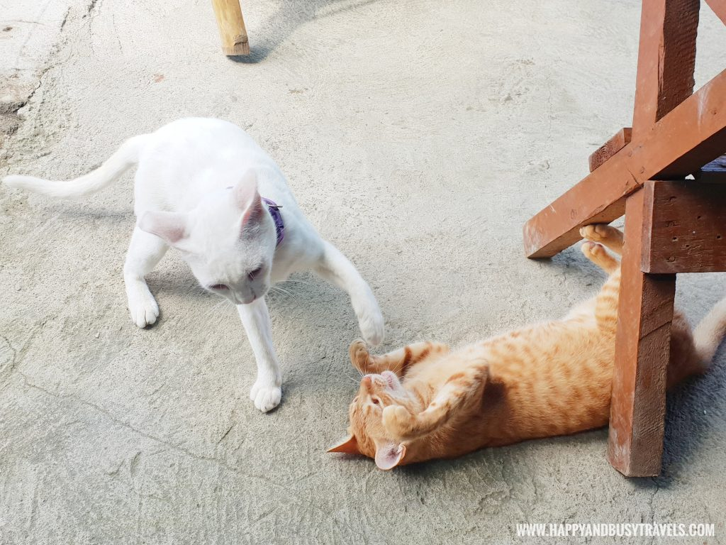 Cats in Summer Cruise Dive Resort Batangas review of happy and busy travels