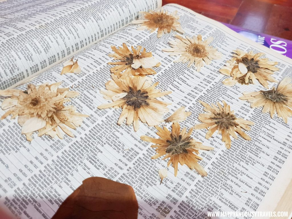 pressed chrysanthemum flowers