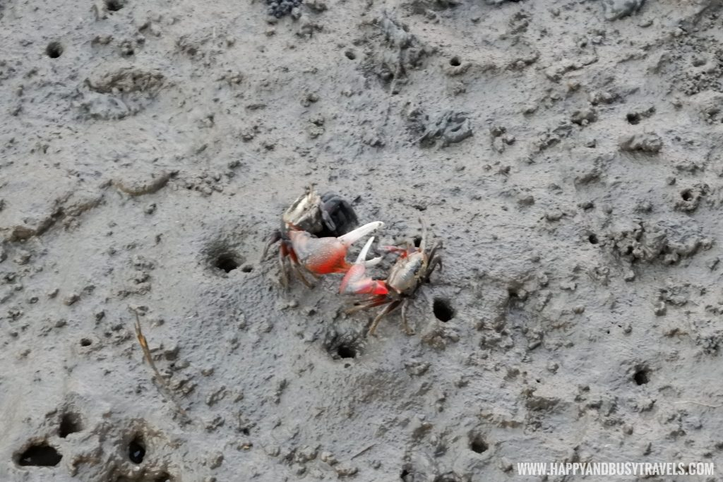 fiddler crabs Gaomei Wetlands 高美溼地 Taichung - Happy and Busy Travels to Taiwan