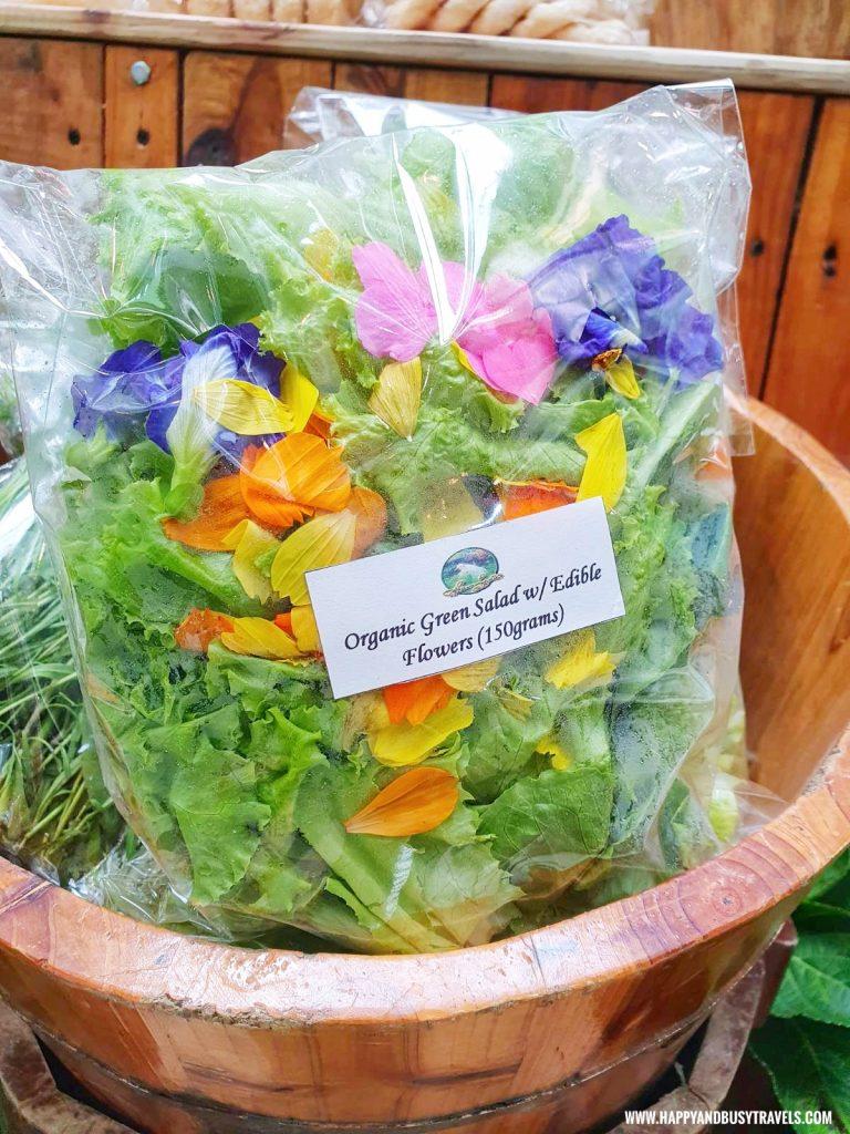 organic green salad with edible flowers of sonyas garden Happy Garden SM Dasmarinas Cavite Plantito plantita plants expo and fresh produce happy and busy travels experience