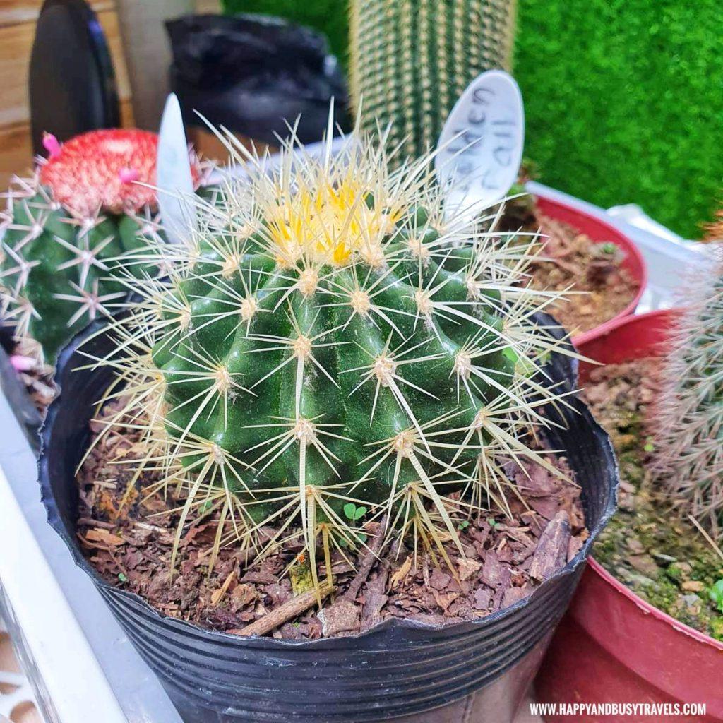 cactus bellas garden pots Happy Garden SM Dasmarinas Cavite Plantito plantita plants expo and fresh produce happy and busy travels experience