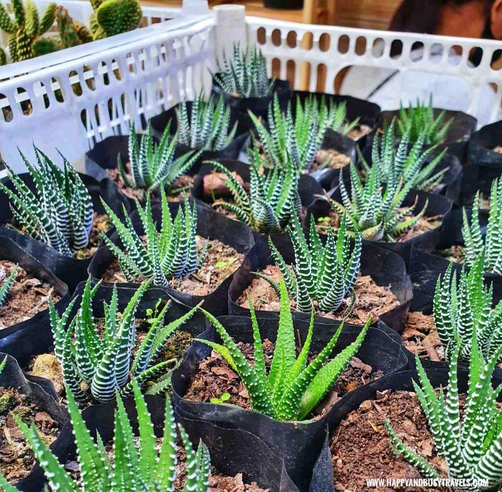 bellas garden pots Happy Garden SM Dasmarinas Cavite Plantito plantita plants expo and fresh produce happy and busy travels experience