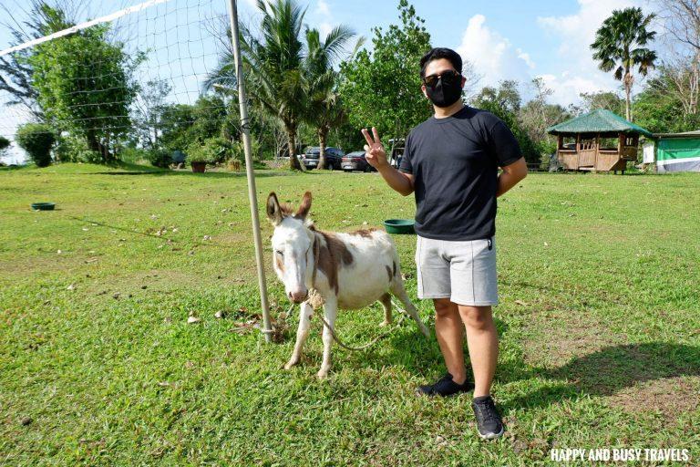 roaming donkeys Farm T House block house - Happy and Busy Travels to Cavinti Laguna
