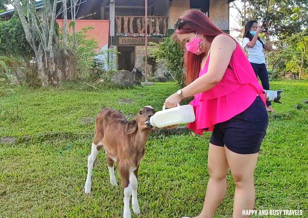 feeding the calf Farm T House block house - Happy and Busy Travels to Cavinti Laguna