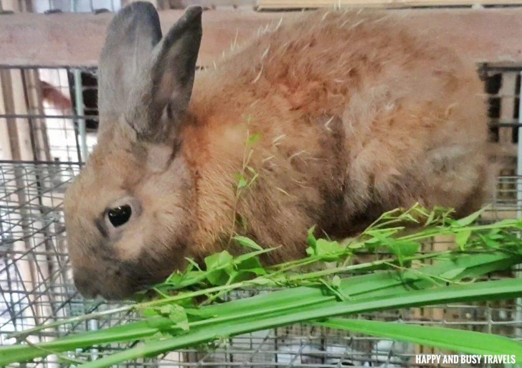 rabbit farm tour Farm T House block house - Happy and Busy Travels to Cavinti Laguna