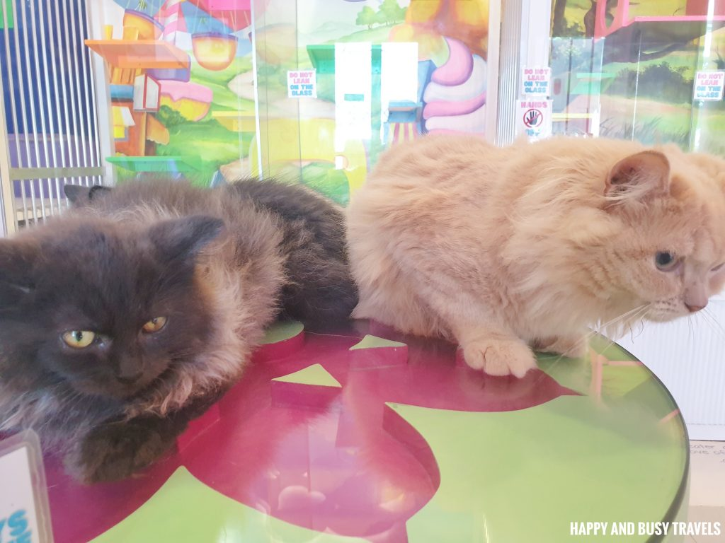 UrPet Babies Cat Cafe - Happy and Busy Travels to Silang Laguna Cavite