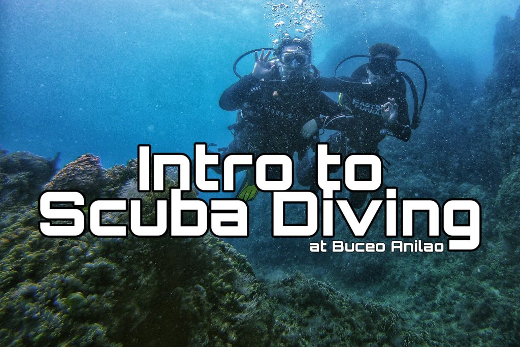 Introduction to Scuba Diving 11 - Cornetfish - Buceo Anilao Happy and Busy Travels Where to stay in Batangas Where to Dive in Batangas